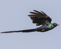 Paul Sterry, Founder and Director of Bird Photographer of the Year, revisits The Gambia